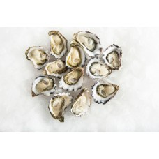 OYSTERS DOZ